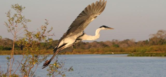 Il Pantanal e la sua natura