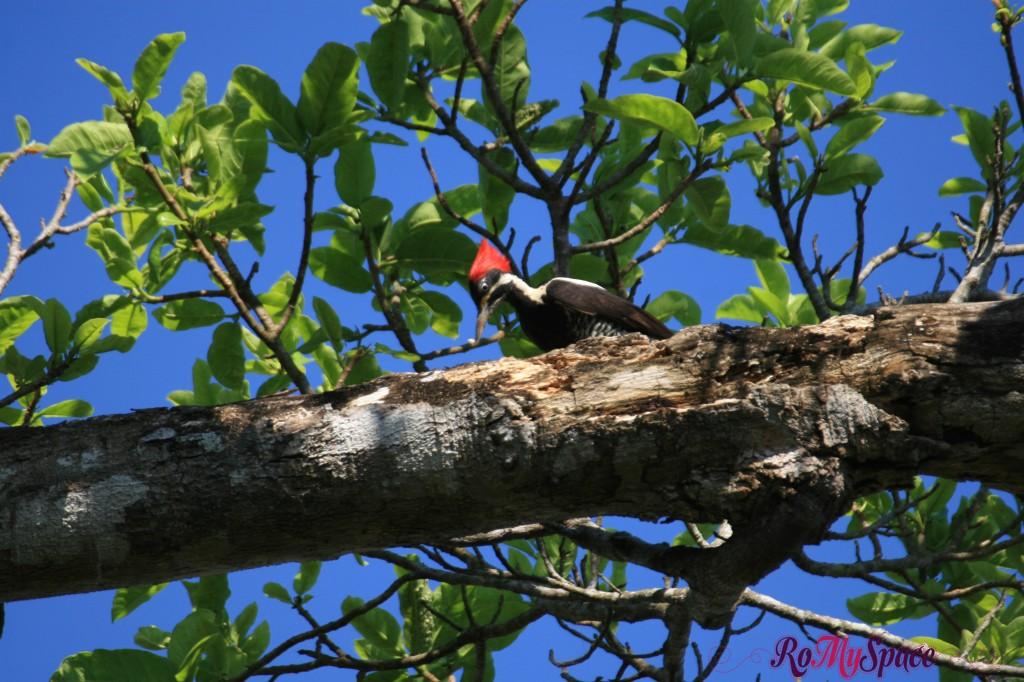Pantanal - Birdwatching