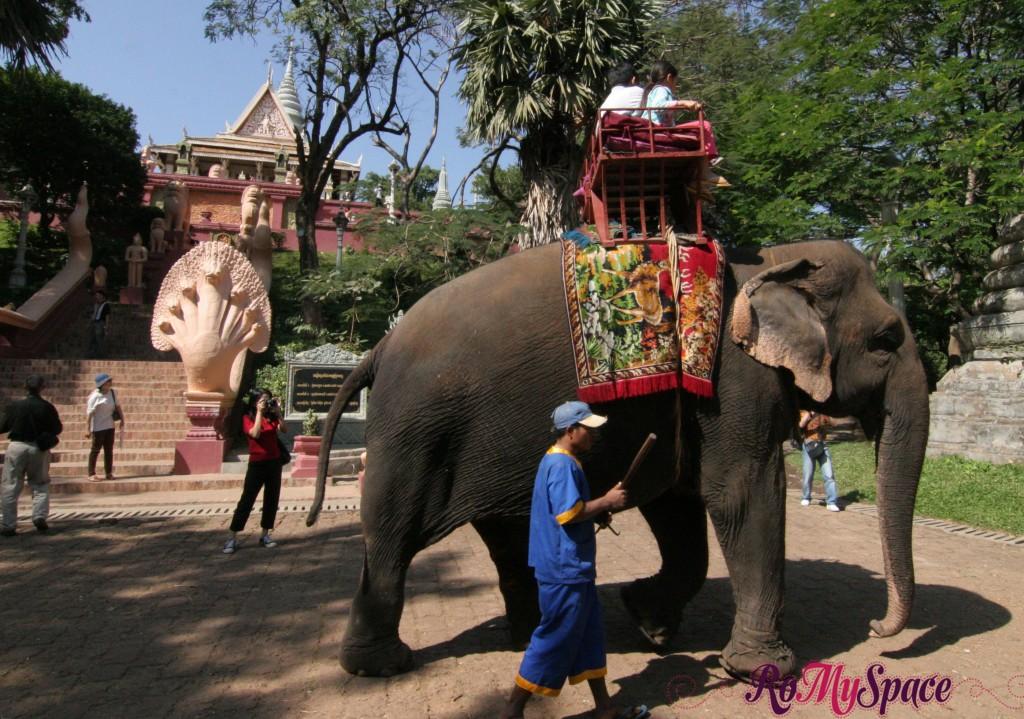 Elefante a Wat Phnom