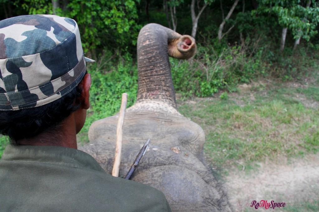 Chitwan Nat. Park - Anarcola il nostro elefante