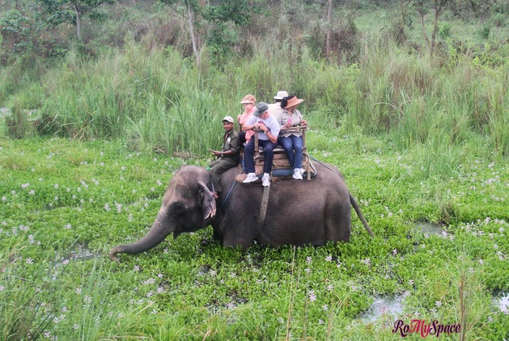 Chitwan Nat. Park - Safari con l'elefante