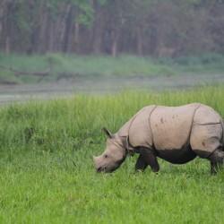 Alla ricerca della tigre e del rinoceronte indiano nel parco di Chitwan in Nepal
