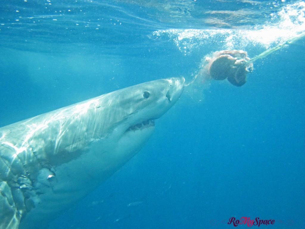 Shark Watching