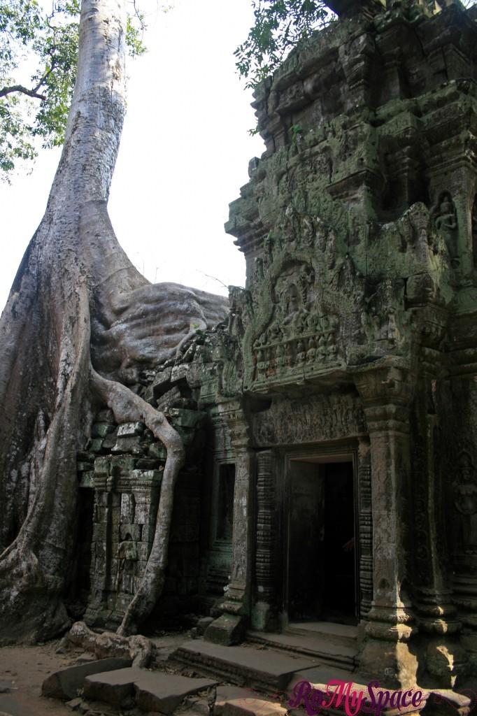 Ta Prohm - Angkor