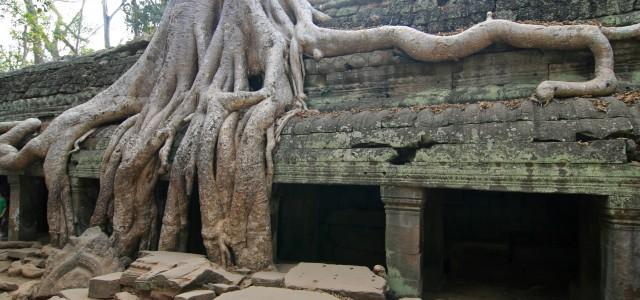 Ta Prohm, il tempio inglobato nella giungla di Angkor in Cambogia