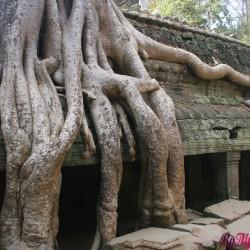 Ta Prohm, il tempio inghiottito dalla foresta