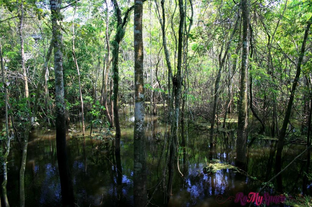 Ramo secondario del RIo Negro in Amazzonia