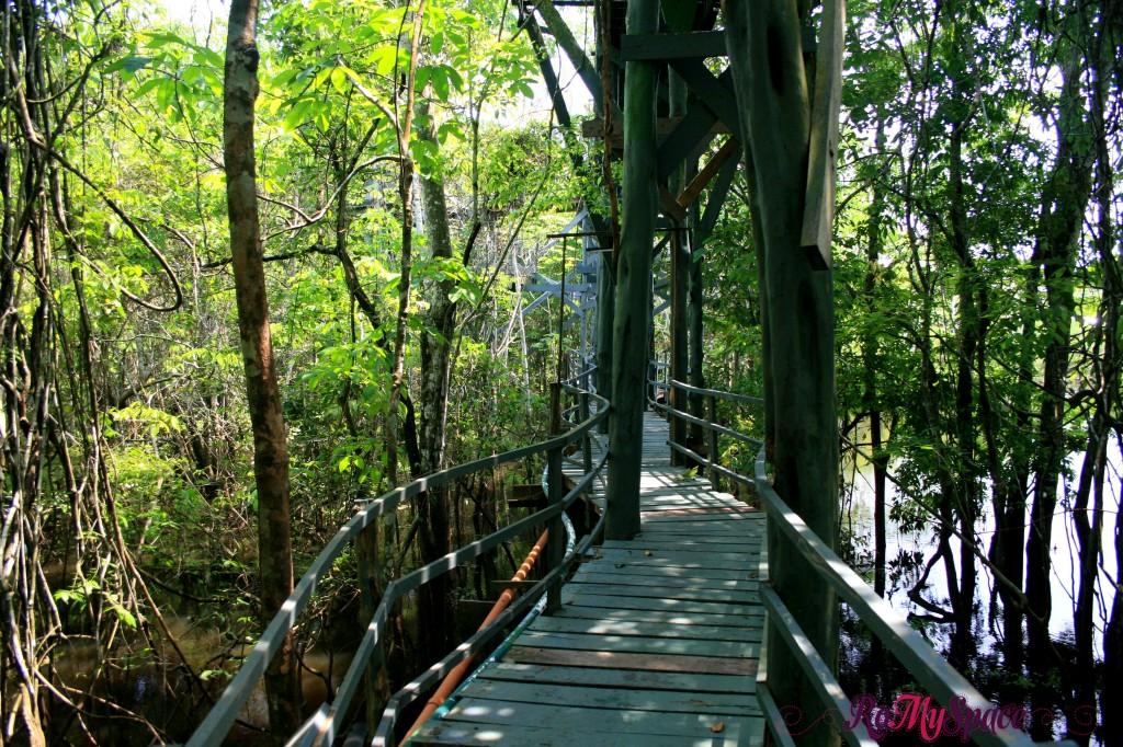 Passerella Ariau Towers sul Rio Negro - Foresta amazzonica