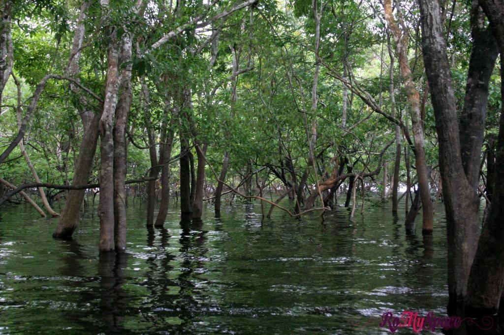 Ramo secondario del Rio delle Amazzoni
