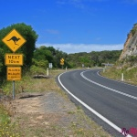 great ocean road_carlotta (309)b