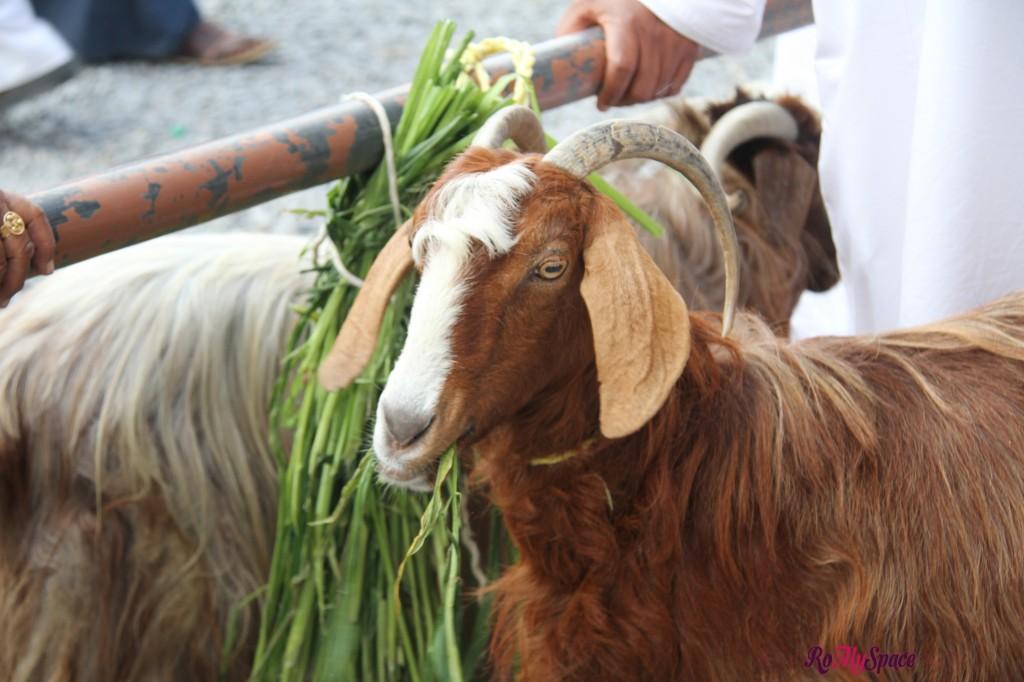 Souq del Bestiame di Nizwa