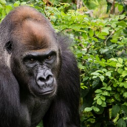Meta per un insolito safari: il Gabon