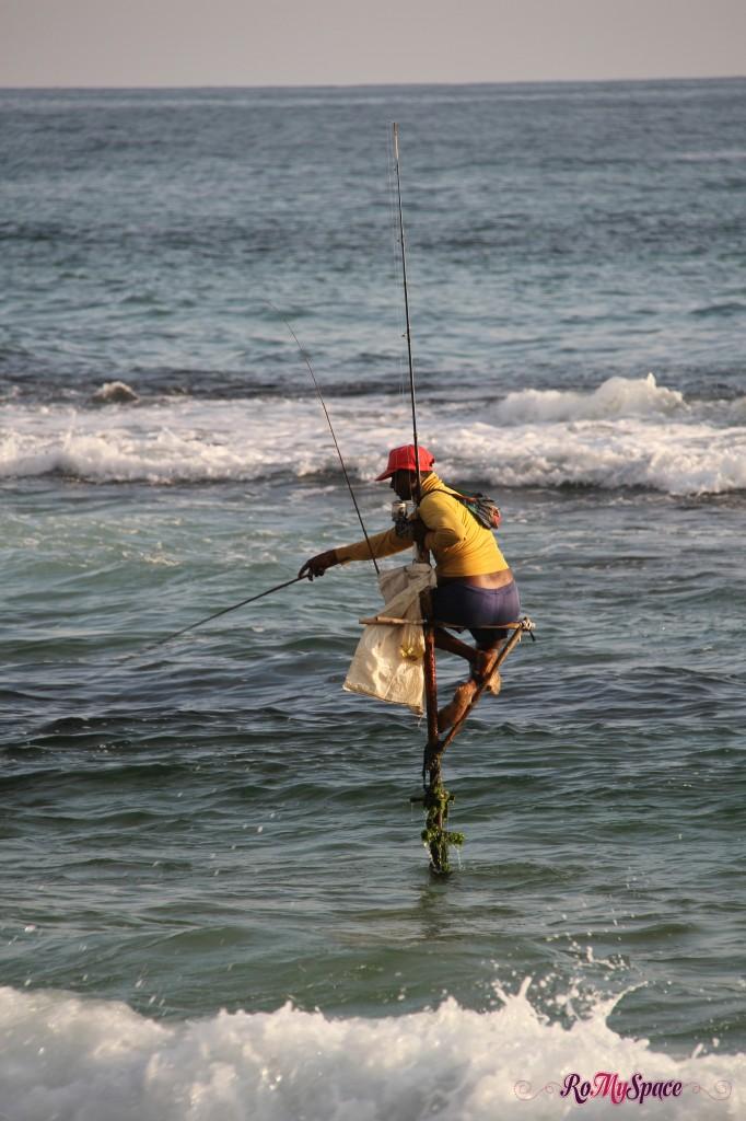pescatore trampoliere