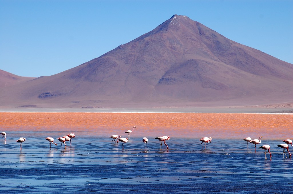 Laguna Colorada - credits David Brickman