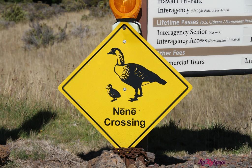 haleakala nat. park - nene crossing