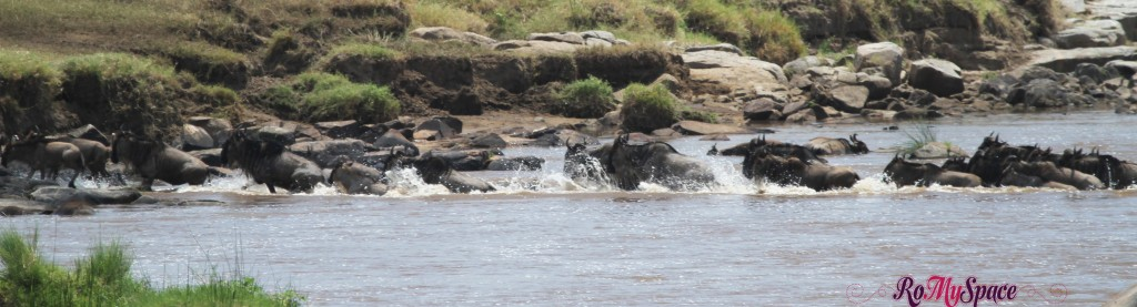 serengeti np_migration_carrie (264)b