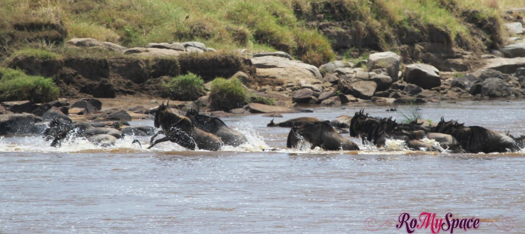 serengeti np_migration_carrie (270)d