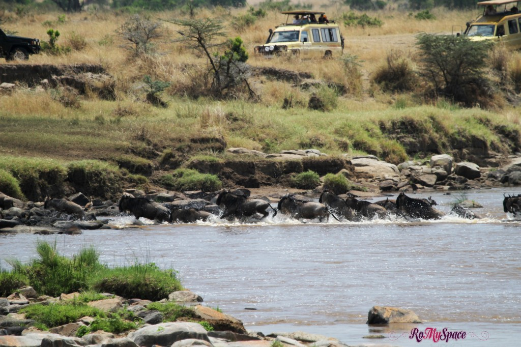 serengeti np_migration_carrie (289)b