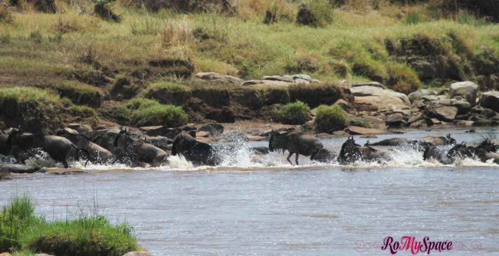 serengeti np_migration_carrie (299)d
