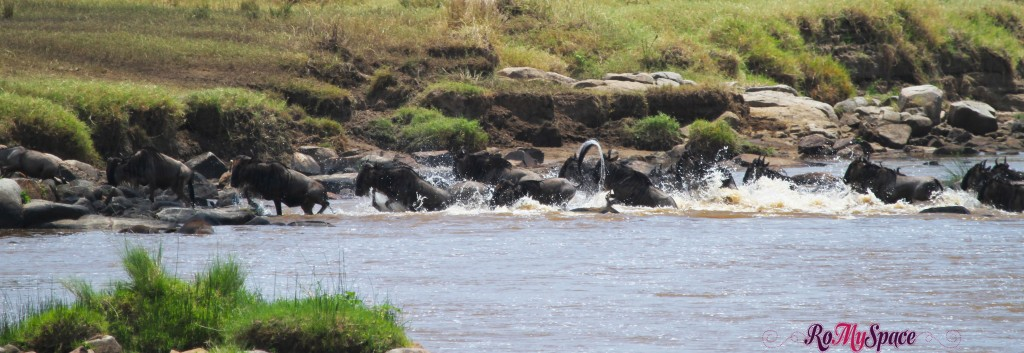 serengeti np_migration_carrie (317)b