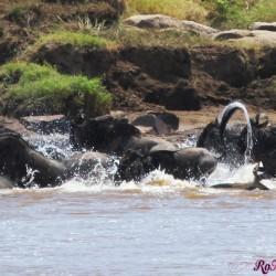La Grande Migrazione nel Serengeti-Mara