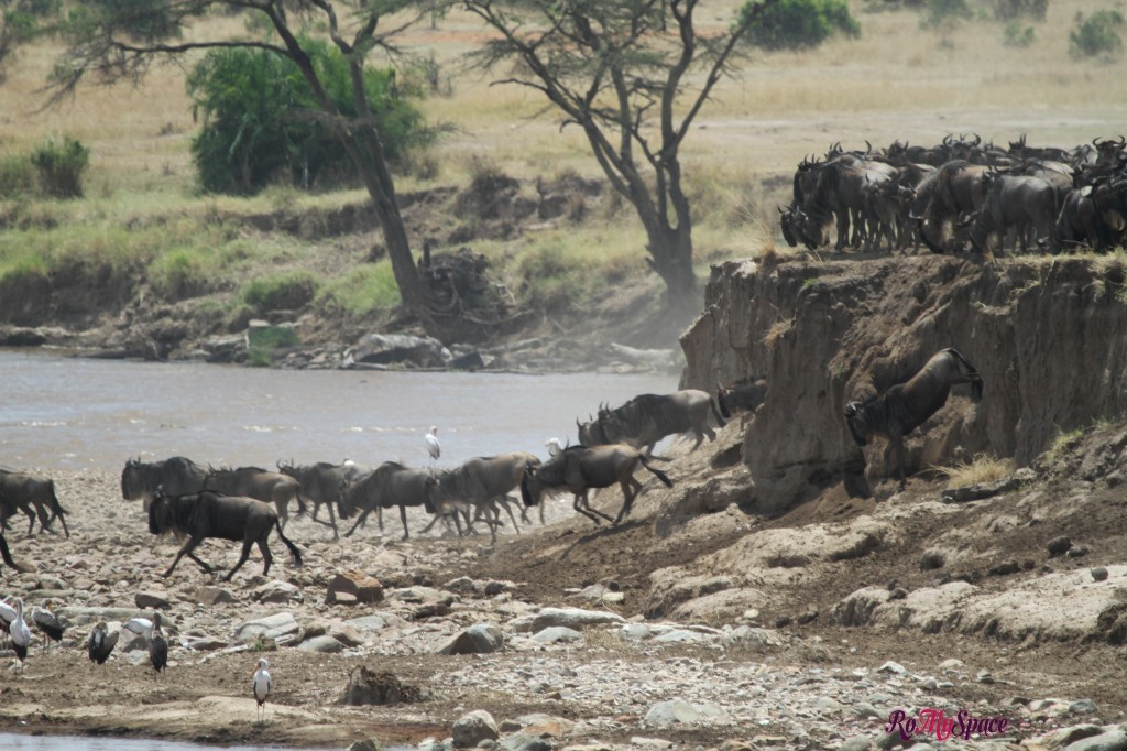 serengeti np_migration_carrie (352)