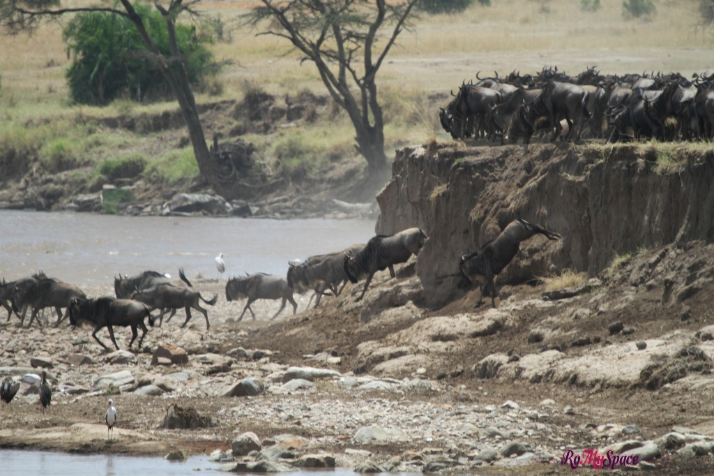 serengeti np_migration_carrie (358)