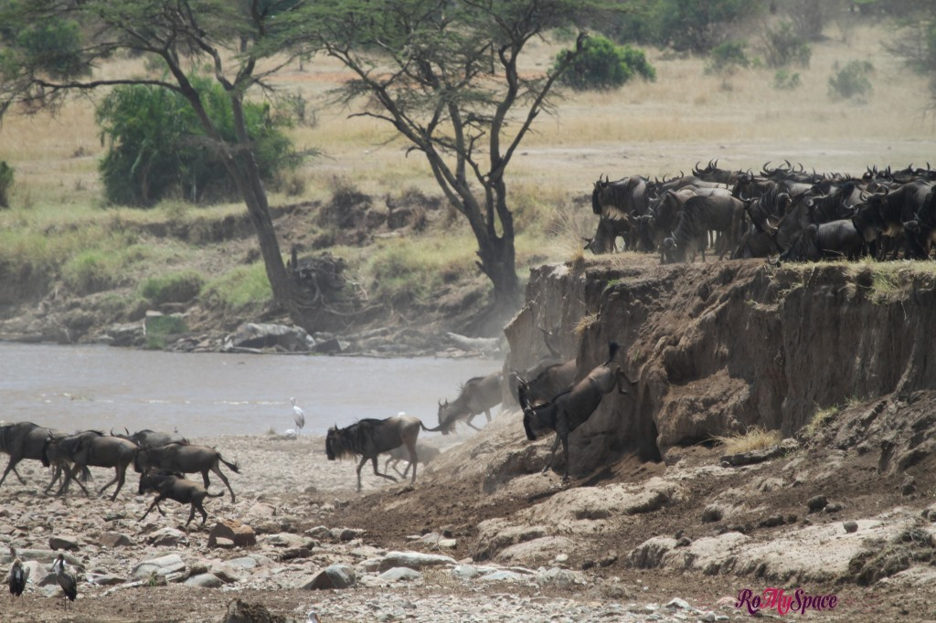 serengeti np_migration_carrie (385)