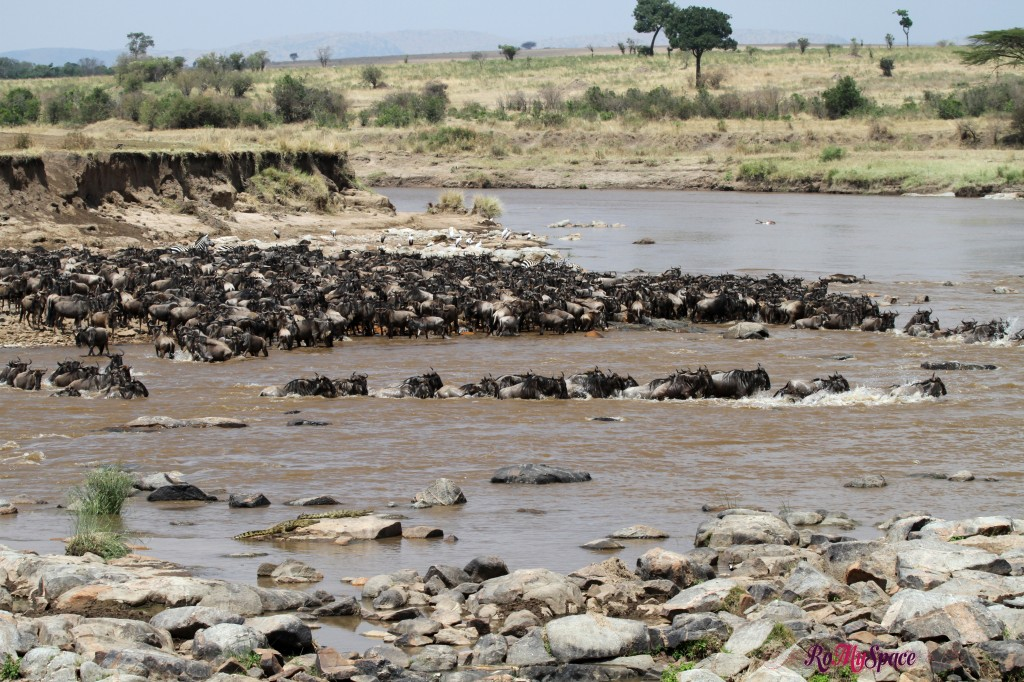 serengeti np_migration_carrie (404)b
