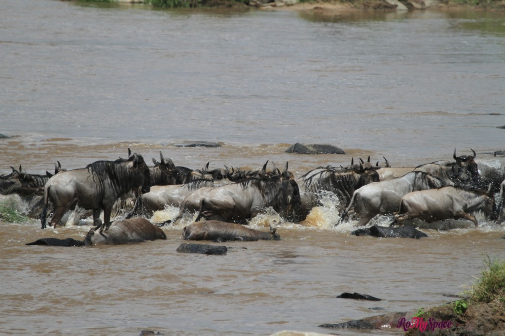 serengeti np_migration_carrie (420)