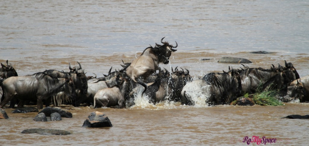 serengeti np_migration_carrie (425)b
