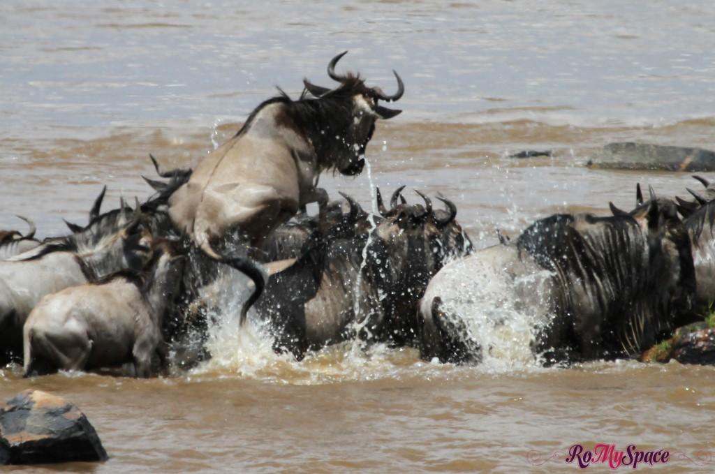 serengeti np_migration_carrie (425)c copia