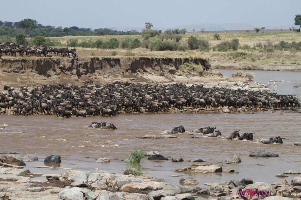 serengeti np_migration_carrie (512)