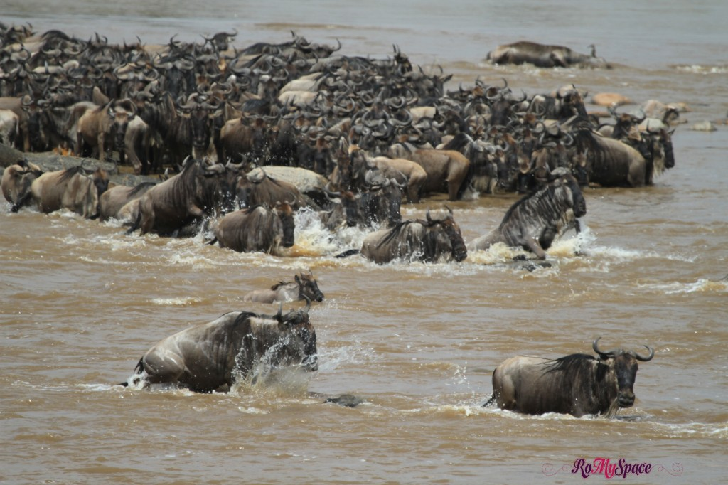 serengeti np_migration_carrie (532)