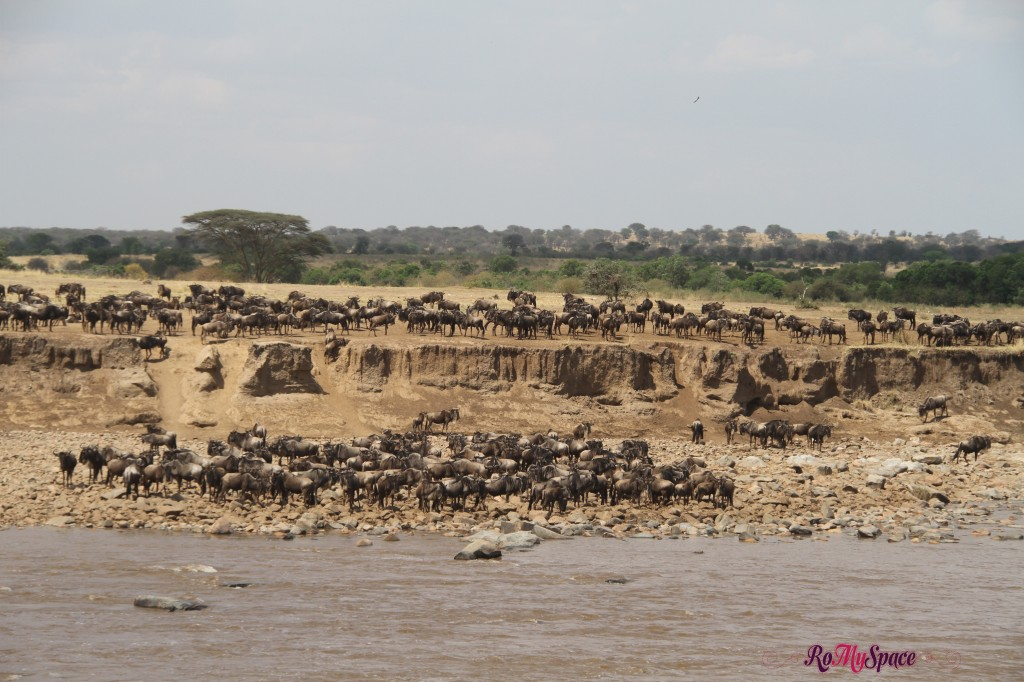 serengeti np_migration_carrie (734)