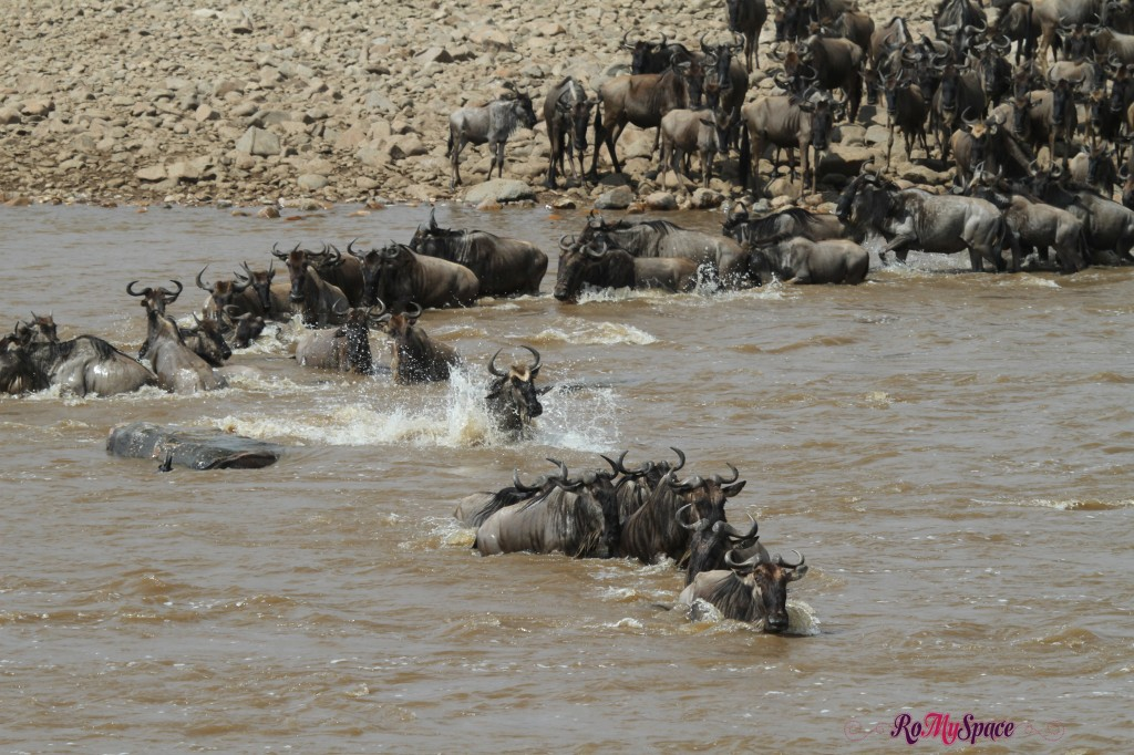 serengeti np_migration_carrie (771)