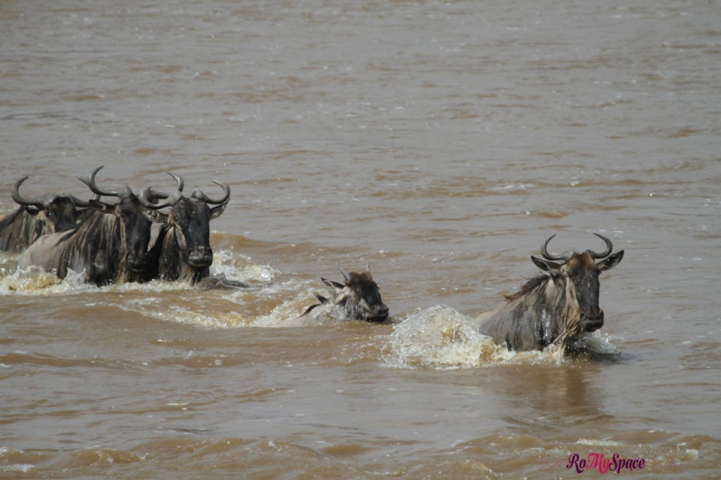 serengeti np_migration_carrie (845)