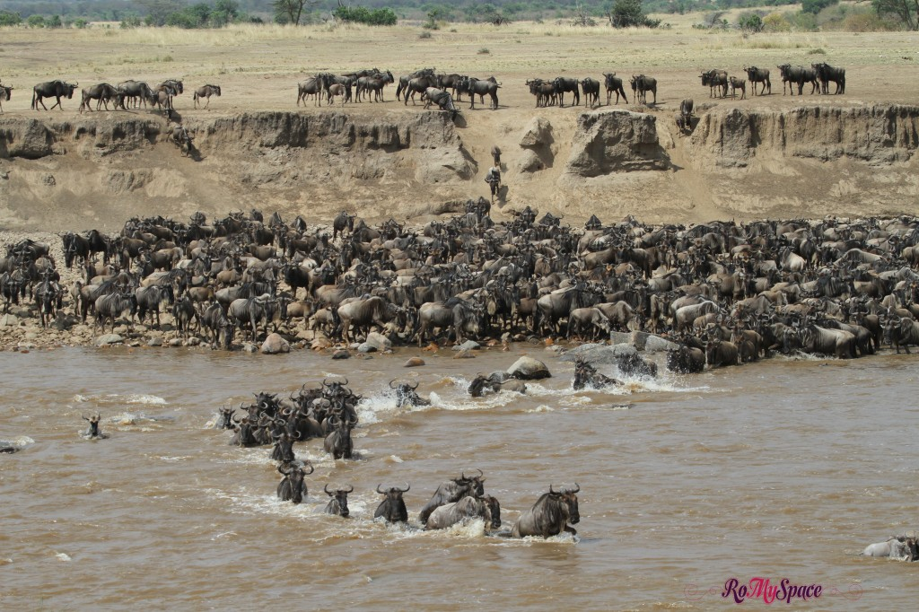 serengeti np_migration_carrie (863)