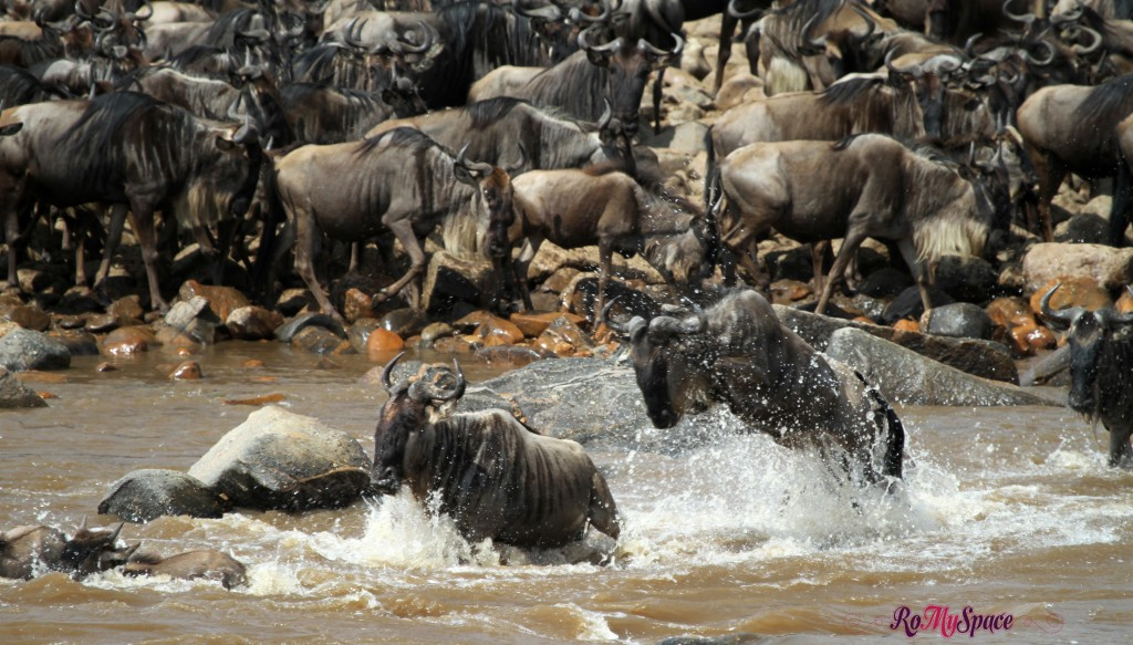 serengeti np_migration_carrie (871)b