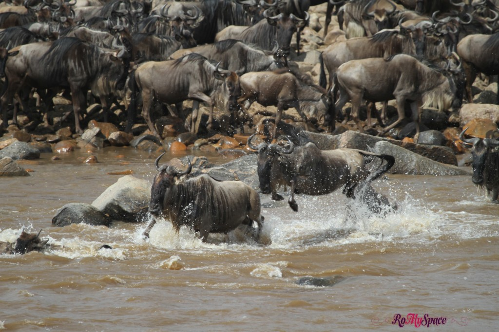 serengeti np_migration_carrie (872)