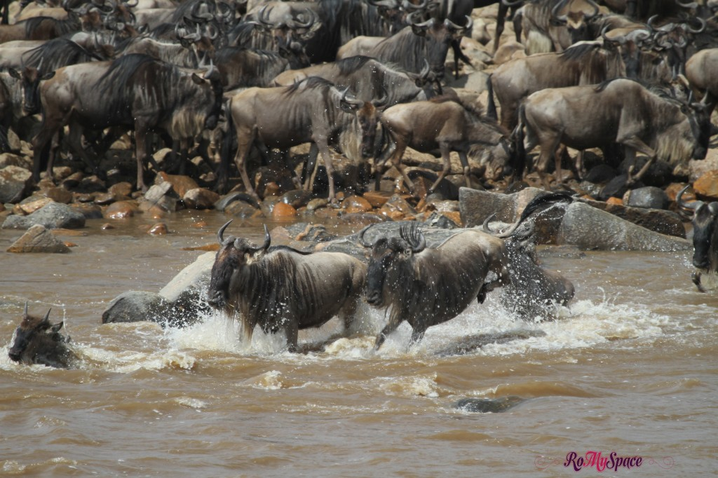 serengeti np_migration_carrie (873)