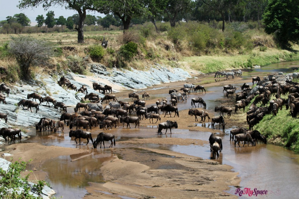serengeti np_migration_carrie (99)b