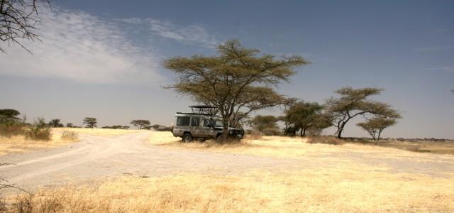 Le 4 migliori esperienze di safari in Tanzania