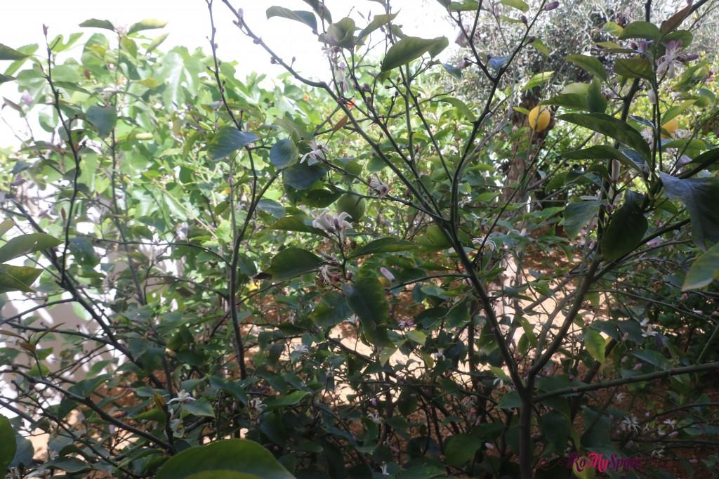 Padiglione Bahrain - Limoni