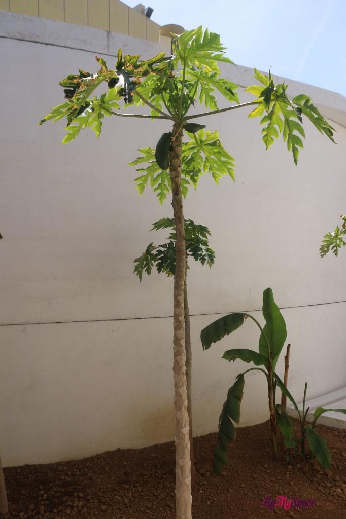 Padiglione Bahrain - Papaya