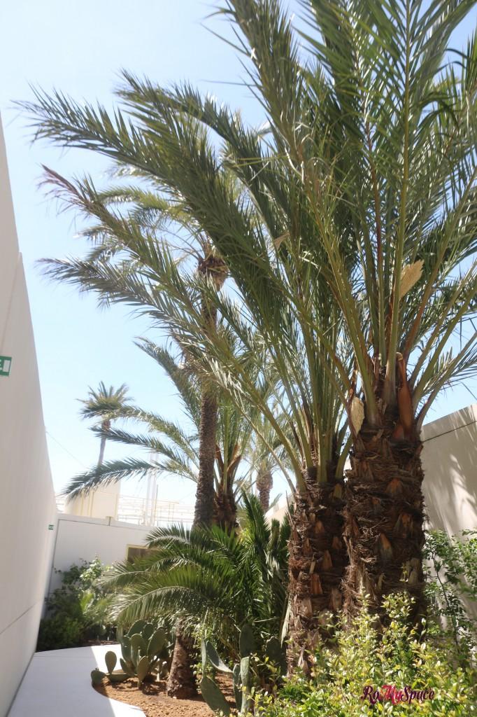 Padiglione Bahrain - Palme
