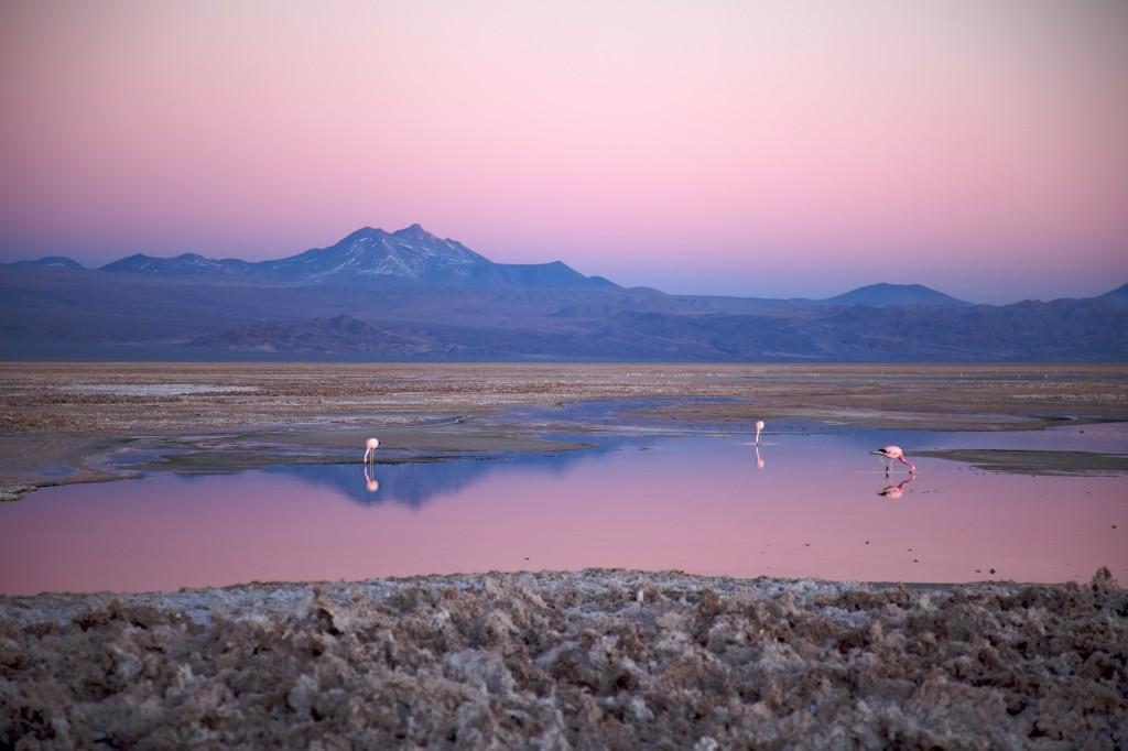 Atacama Salar de Atacama Credits Nicolas de Camaret