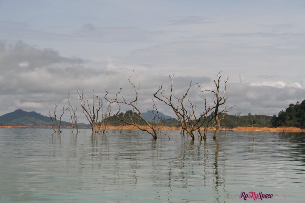 alberi morti dovuti all'allagamento a seguito della costruzione della diga