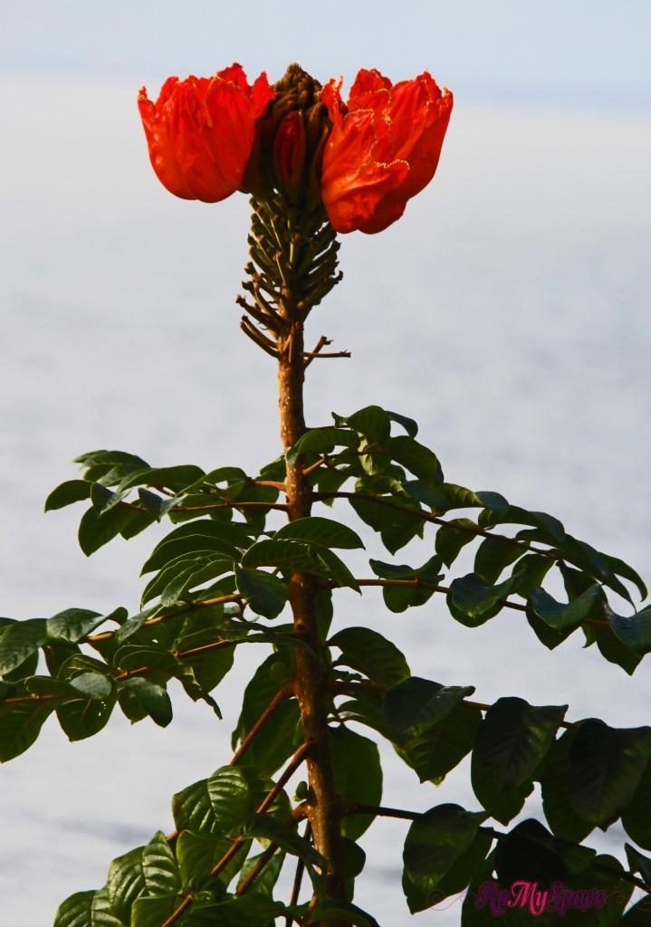 Hana Highway - fiore selvaggio