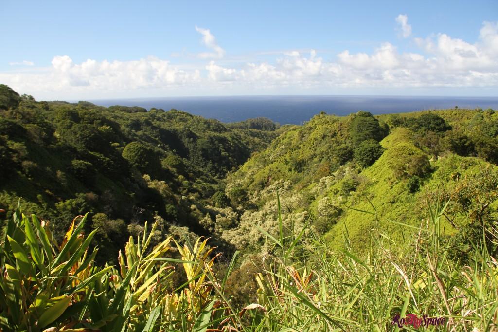 Hana Highway - la foresta pluviale